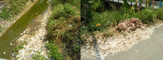 Gambar Sampah bulu ayam yang dibuang di sekitar sungai.