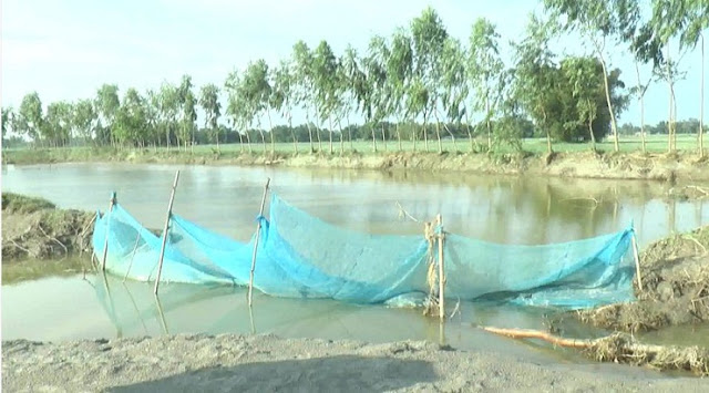 65-thousand-fish-farmers-in-Rangpur-hand-on-the-head