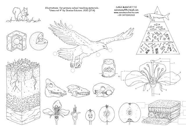 textbook illustration nature