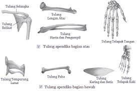 Fungsi Tulang Atas pada Lengan Manusia Beserta Penjelasannya