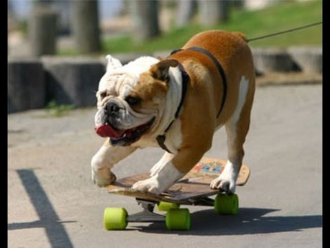 image dr le du net chien rigolo qui fait du skateboard. Black Bedroom Furniture Sets. Home Design Ideas