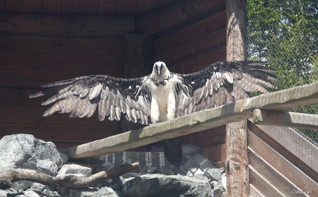 Rapace, parc des Oiseaux de Villars-les-Dombes