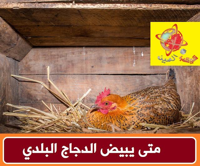 """""""متى يبيض الدجاج البلدي"""" """"كم يبيض الدجاج البلدي في السنة"""" """"كم يبيض الدجاج البلدي في اليوم"""" """"كم يبيض الدجاج البلدي"""" """"متى تبيض الدجاج البلدي"""" """"في اي شهر يبيض الدجاج البلدي"""" """"كم يبيض الدجاج البلدي في الشهر"""" """"متى تبيض الدجاجة البلدي"""" """"متى تبيض الدجاجة البلدية"""" """"الدجاج البلدي متى يبيض"""" """"كم تبيض الدجاجة البلدي في السنة"""" """"كم تبيض الدجاجة البلدية في السنة"""" """"كم بيضة تبيض الدجاجة البلدية في السنة"""" """"كم تبيض الدجاجة البلدية في اليوم"""" """"كم بيضة تبيض الدجاجة البلدية في اليوم"""" """"كم تبيض الدجاج البلدي"""" """"كم تبيض الدجاجة البلدي"""""""