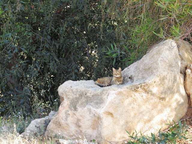 Cyprus Road Trip Itinerary: Cat on a rock at the Tomb of the King of Paphos
