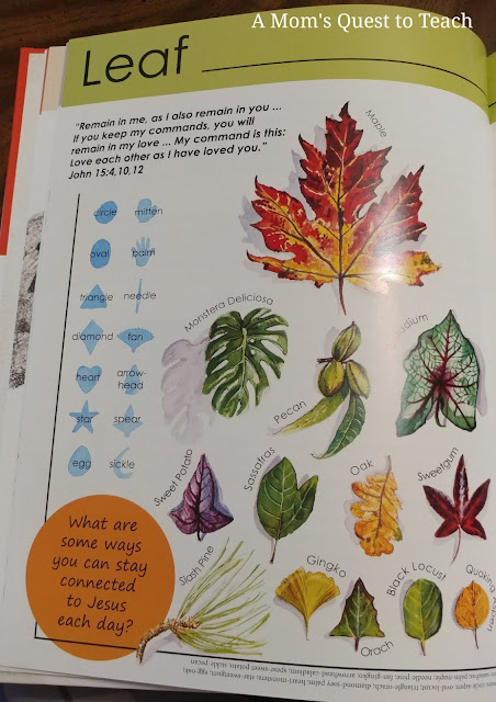 leaf page in God's Amazing World