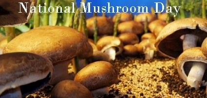 National Mushroom Day Wishes Photos
