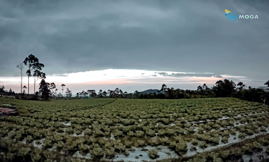 Cuaca Wilayah Moga & Sekitarnya Hari ini, Jumat 20 November 2020