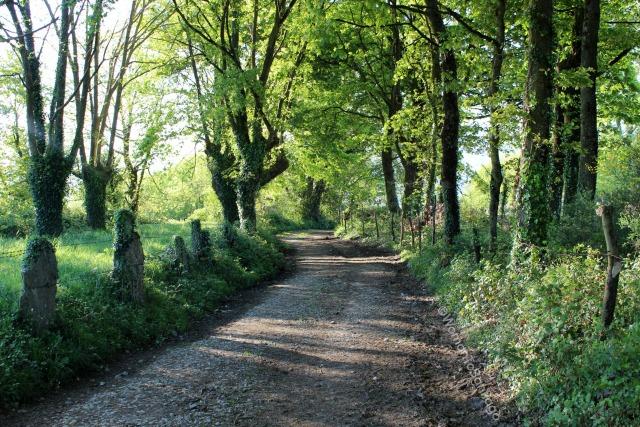 camino-de-santiago-frances-bosque-barbadelo-a-mercadoiro