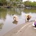 Sungai Desa Buyat Terkontaminasi Bakteri Fecal Coliform