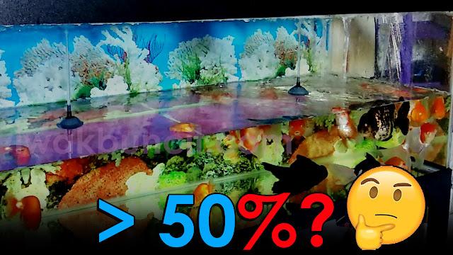 Penggantian Air Aquarium Ikan Mas Koki Lebih dari 50%: Apa yang Bakal Terjadi?