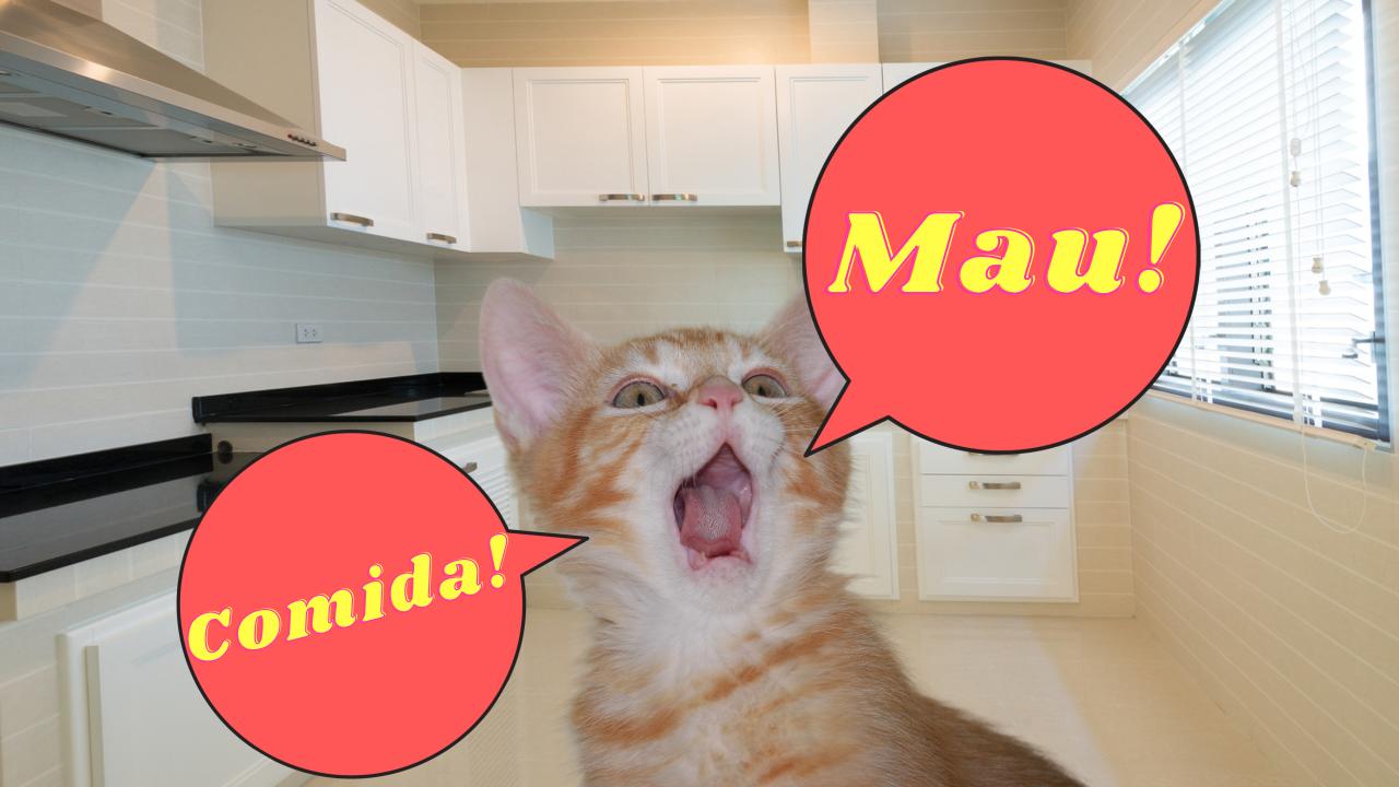 Por qué maúlla mi gato
