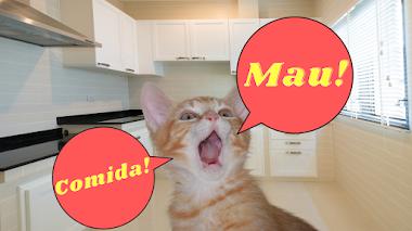 ¿Por qué maúlla mi gato? Te damos 4 razones