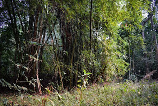 Lawachara national park composition