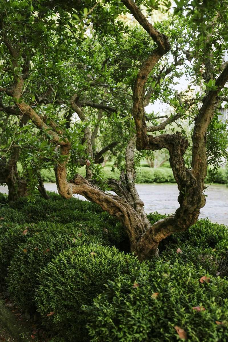 Bosque y arroyo de Torrecchia Vecchia