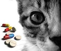 Gato e Anti-inflamatórios