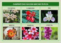 Jenis Tanaman Bunga dan Penyakit yang Bisa Ditangani