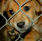 mascotas en adopción en colombia