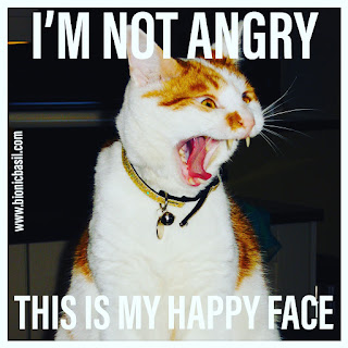 Angry Amber @BionicBasil® Bad Tempered Kitty - I'm Not Angry This is My Happy Face