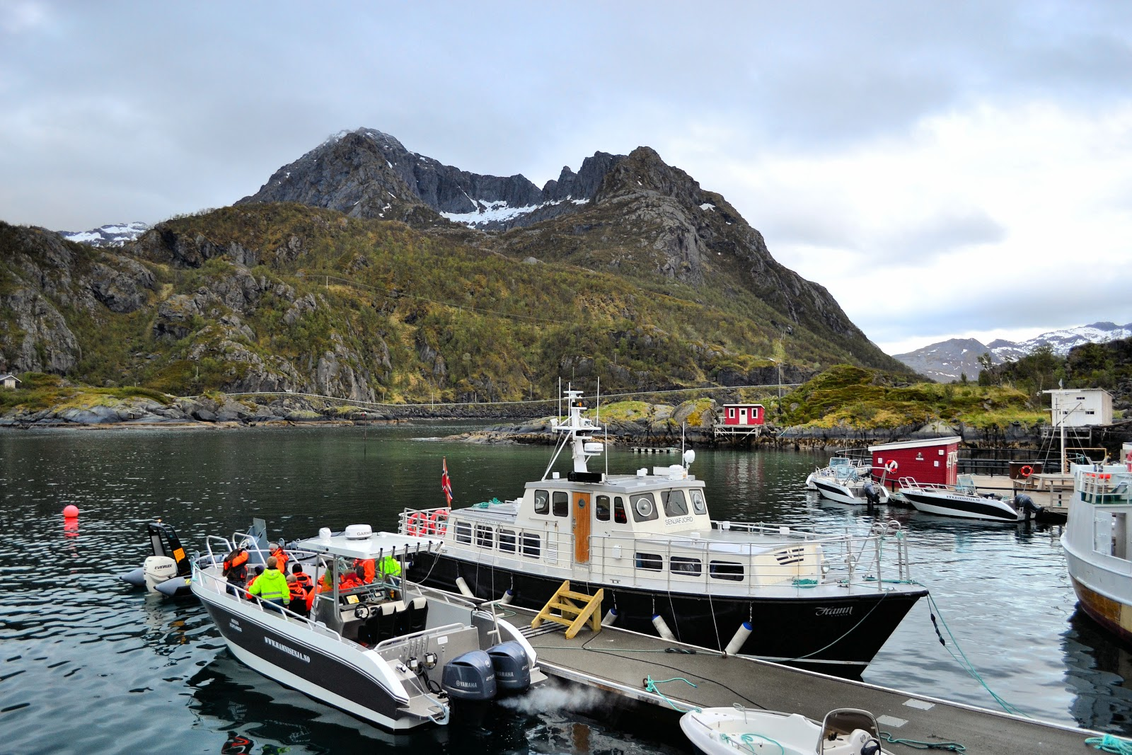 Hamn I Senja harbor is where we began our sea safari.