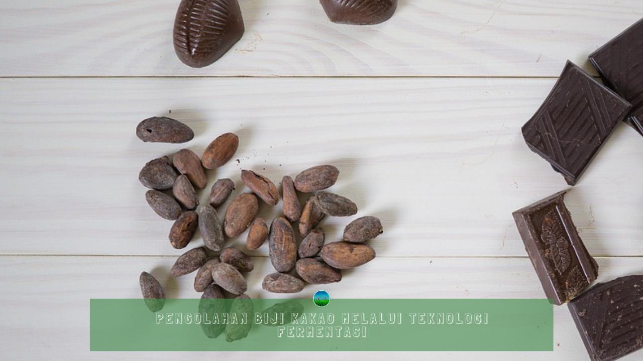 Pengolahan Biji Kakao Melalui Teknologi Fermentasi