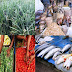 Poisons used in some African Markets to beautify food on sale