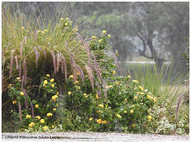 Plantas bajo la lluvia - Chacra Educativa Santa Lucía
