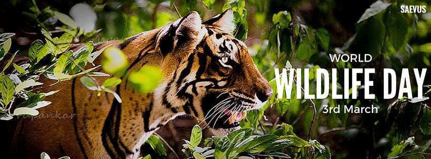 World Wildlife Day Wishes Photos