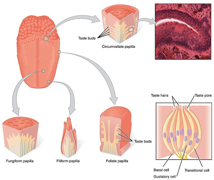 OpenStax Anatomy and Physiology