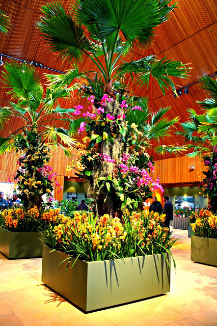Stunning orchid display during The Orchid Show at Chicago Botanic Garden
