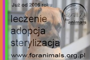 Fundacja For Animals