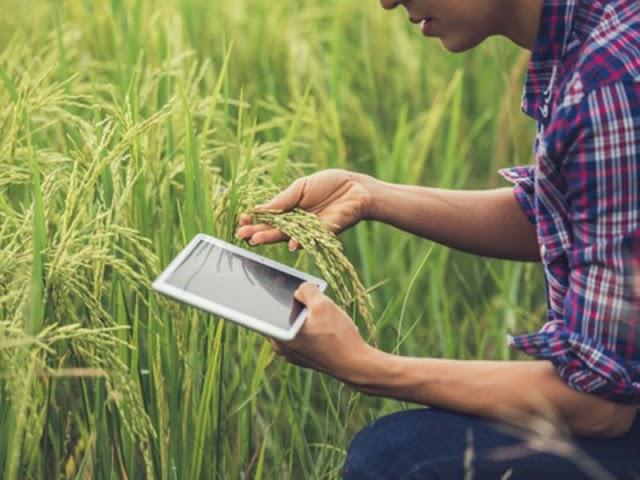 Top MBA in Agri-Business Management Colleges in Maharashtra