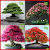 Bonsai Tree Buy With 77% Discount