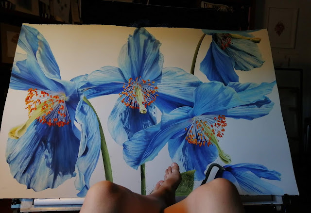 Blue Poppy painting illustration