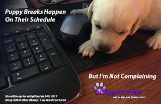 Puppy Break