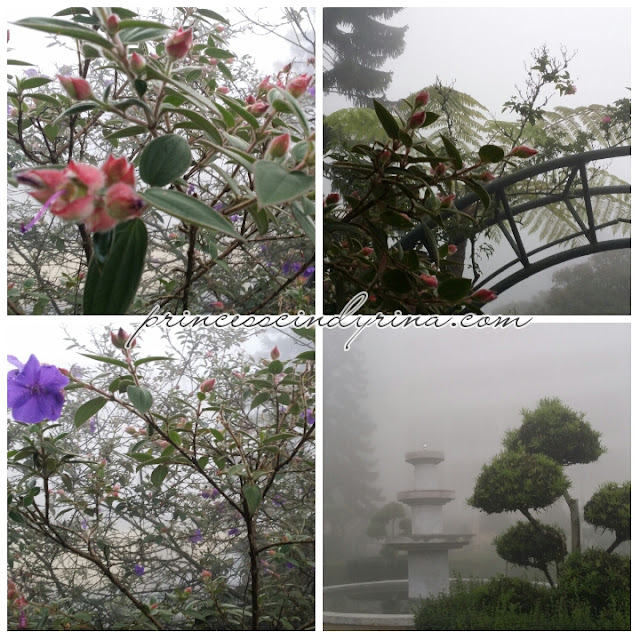 flowers shrouded in mist