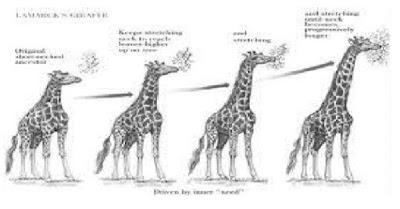 Teori jerapah berleher panjang menurut Lamarck dan Erasmus Darwin.