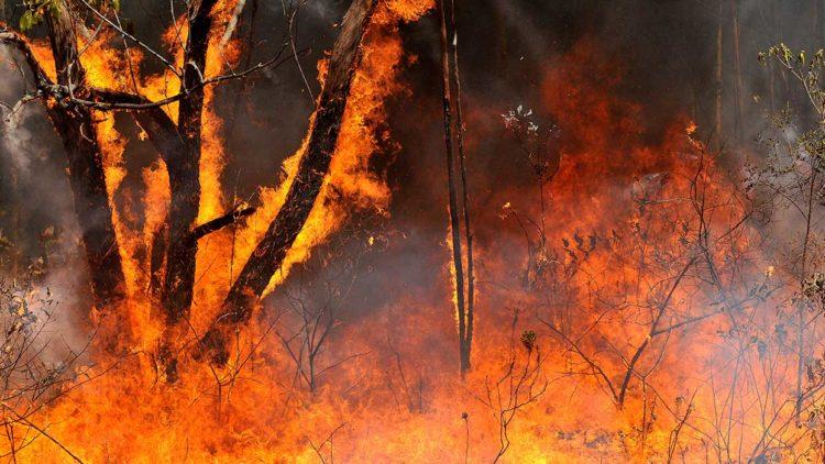 L'Amazonie en feu : une affaire de souveraineté étatique ?