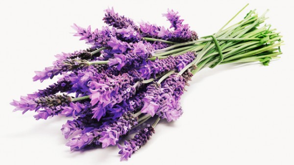 Benefits of lavender for hair and skin
