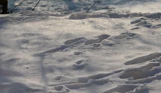 Sun sparkling on the snow