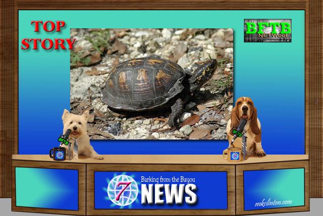 BFTB News turtle story