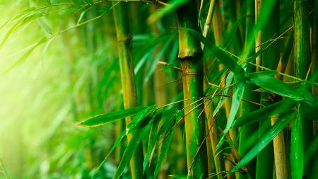 Dahsyatnya Filosofi Pohon Bambu !..