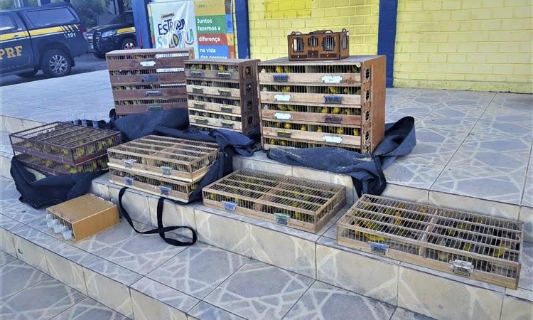 PRF resgata 800 pássaros dentro de porta-malas de carro na Chapada Diamantina
