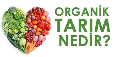 Organik Tarım Nedir? Faydaları ve Zararları Nelerdir?