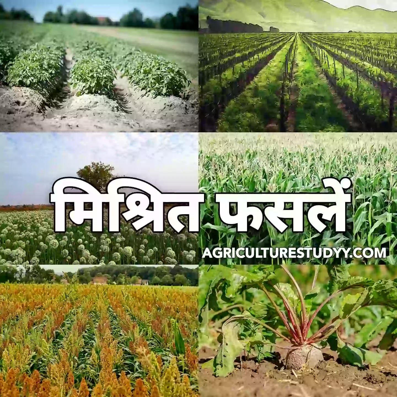 मिश्रित फसल किसे कहते है इसके लाभ, हानियां एवं सिद्धान्त लिखिए ( What is a mixed crop, write its benefits, losses and principles )
