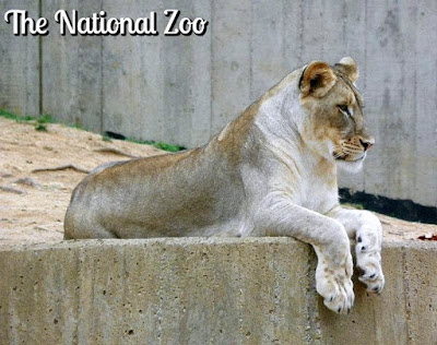 Smithsonian's National Zoo in Washington DC