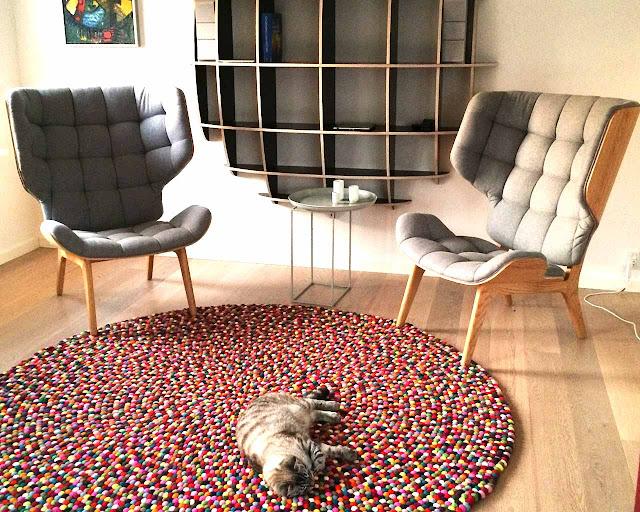 gatto tappeto sedie stanza