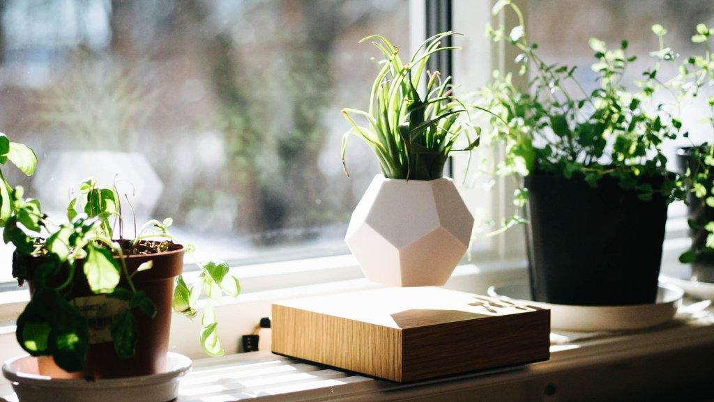 lyfe un pot de fleur design en l vitation. Black Bedroom Furniture Sets. Home Design Ideas