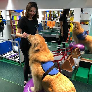 treinamento de força em cães