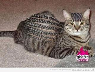 Peinados para mascotas