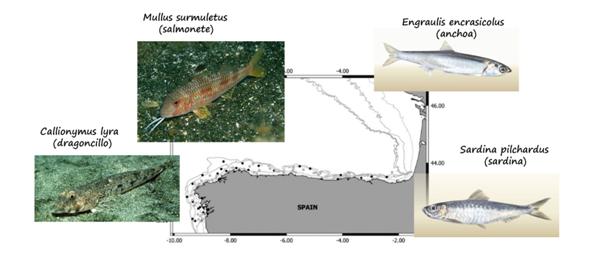 NP 300920 Micropl%25C3%25A1sticos%2Ben%2Bpeces.PNG - Investigadores del Instituto Español de Oceanografía encuentran microplásticos en peces del noroeste ibérico